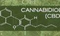 Introduction to CBD – Cannabidiol